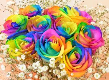 rainbowrosekasumi33-22