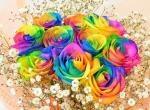 rainbowrose10kasumi300220